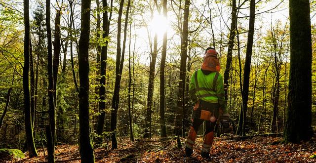 Skogsarbetare i motljus Munkagårdsgymnasiet.