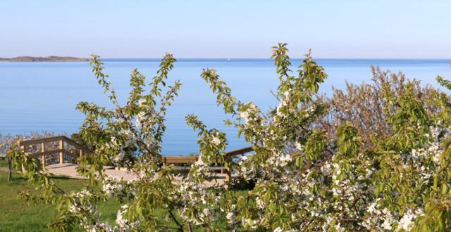 Blommande buskar med hav i bakgrunden.